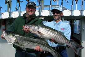 Striper Fishing Charters